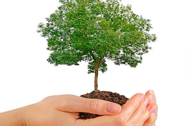 Inversiones Forestales Aseguradas
